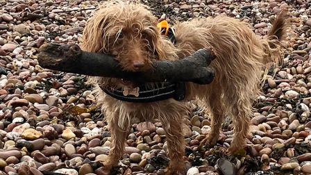 Toto logs on at the beach