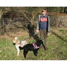 A dog walk for a 14th Lowestoft troop member as part of theScouts Lands End to John O' Groats Virtual Challenge.