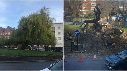 """A before and after shot of the """"much-loved"""" willow in South Hampstead. Picture: Kenteas Brine/Ivana"""