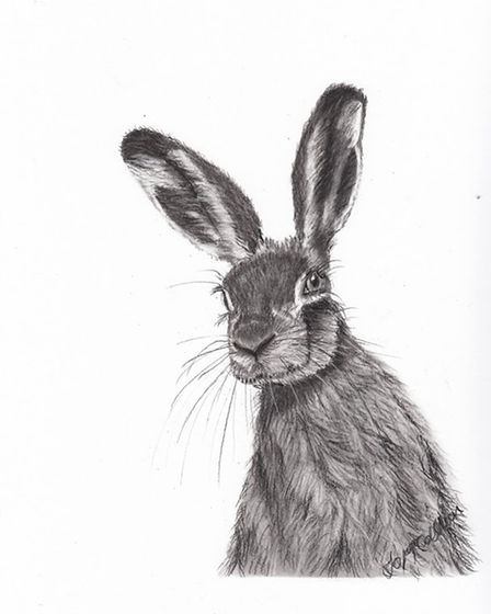 Harry the Hare by Jo McCallion