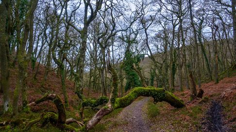 A Woodland path through Great Wood in the Quantock Hills of Somerset