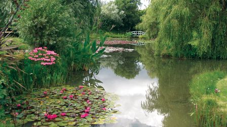 The Waterlily Pond at Bennetts Water Gardens in Weymouth, Dorset