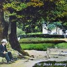 Early 1900s tinted postcard, showing the great elm and stocks