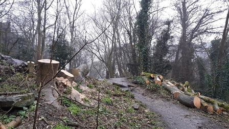 Trees have been cut down along the length of the Parkland Walk.
