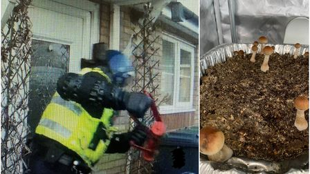 Cambridgeshire's first 'magic mushroom' factory was discovered by police in a Huntingdon house.