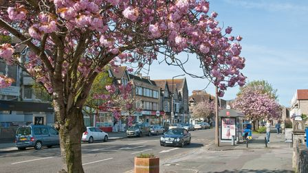Flowering cherry trees have long been a feature of the picturesque Boulevard.