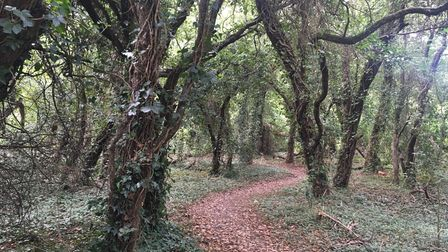Hainault Forest. Picture: Lindsay Jones