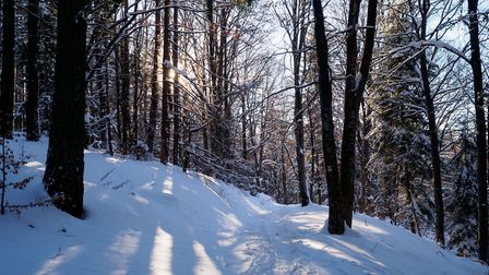 Here are some pretty woodlands to explore during the winter (photo: Victor Semionov, Flickr, CC BY 2
