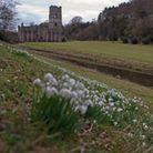 Snowdrops at Fountains Abbey