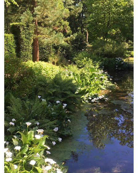 Waterside planting in the gardens at Chideock Manor in Dorset