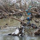 Plastic rubbish embedded and woven into trees on the river Lea at Hackney marshes.