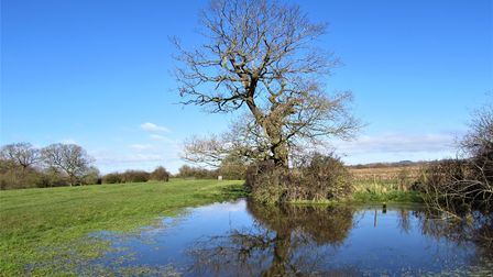 Waterlogged field on the Sandstone Trail