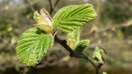 New growth can be seen on trees as spring arrives.