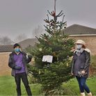 Papworth Everard's Coronavirus support group, putting up a Christmas tree in the village in December 2020.