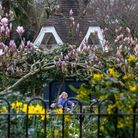 Spring flowers at Roundwood Park, Harlesden.Katlyn Gold, 3 is photographed