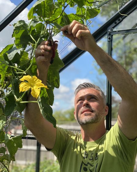 Rob Smith tending his luffa in the greenhouse.