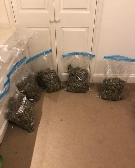 Cannabis bust from multi-force raids