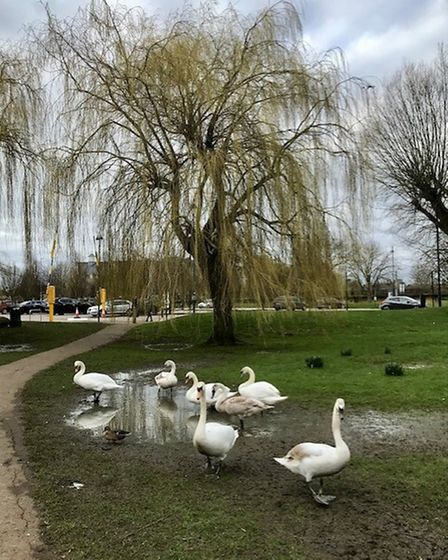 Tracy Finch took this photograph at the Riverside Park in St Neots.