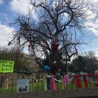 The mulberry tree on the Park View Estate off Collins Road, that Islington Council wants to chop down to make way for flats