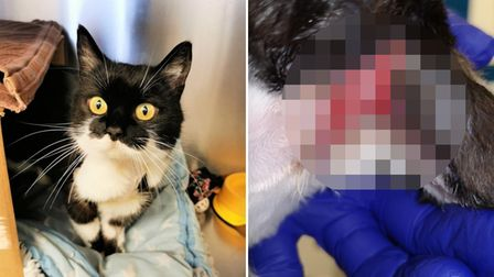 Cats Protectioncollar warning after injured Wisbech cat