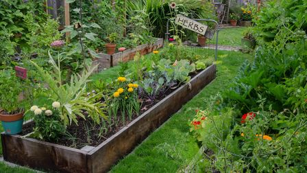 Raised beds are ideal if you don't want to dig up your lawn.