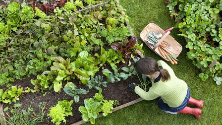 Whether you build your own raised bed from scratchor usea kit is down to personal preference.