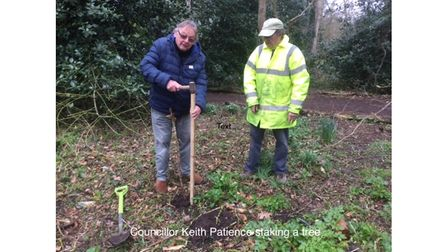 Cllr Keith Patience staking a tree in Gunton Wood.