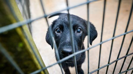 Black labrador Tara was also seized at Dover and will be rehomed