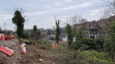 Adelaide Wood with the trees cut down