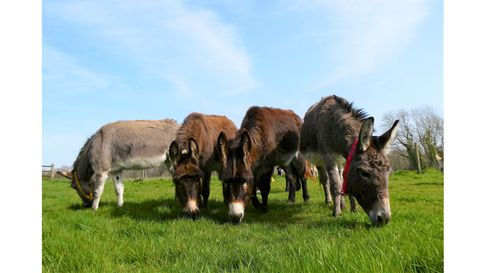 Donkey's from The Donkey Sanctuary in Sidmouth