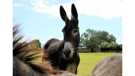 See the donkeys 'From Your Sofa'