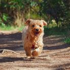 Here is a list of some of the best dog-friendly walks within an hour's drive of Weston.