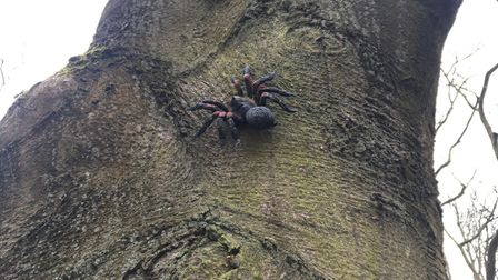 A model spider in one of the trees at Mousehold Heath.