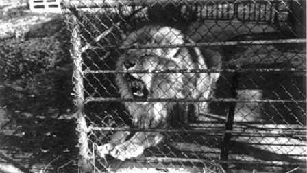 The old lion enclosure at the zoo.