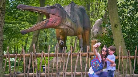World of Dinosaurs at Paradise Wildlife Park.