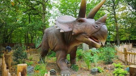 A triceratops in the World of Dinosaurs at Paradise Wildlife Park.