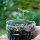Undated Handout Photo of the bottom of a plastic bottle being upcycled to grow a seedling. See PA Fe