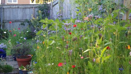 Wild flower patch from last year which is popular with pollinators