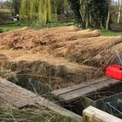 A boat moored on the river Bure with piles of reeds on top.