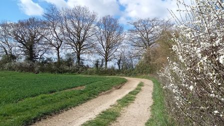 Gillian Butt sent us her image of hedgerows in Southoe.