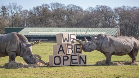 A crash of rhinos re-opened Whipsnade Zoo in style.