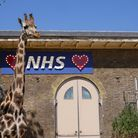 NHS sign at the Giraffe House at London Zoo