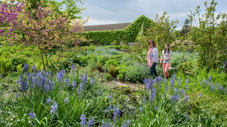 Spring colour in bloom at RHS Hyde Hall in Essex