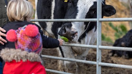 Brentwood, Essex, UK. 12th April 2021. Hopefield Animal Sanctuary reopens for the first time in five