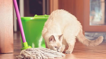 Indoor air contains particles we can't see or always smell, including pet dander andskin scales.