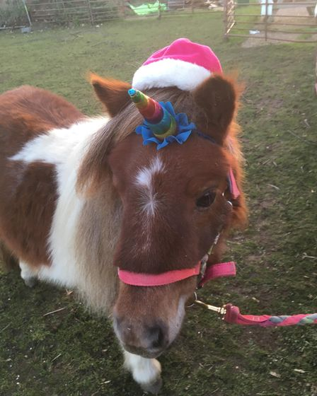 Poppy the Christmas Unicorn getting ready for Angelica's Rainbow event at Marlpit Community Centre.