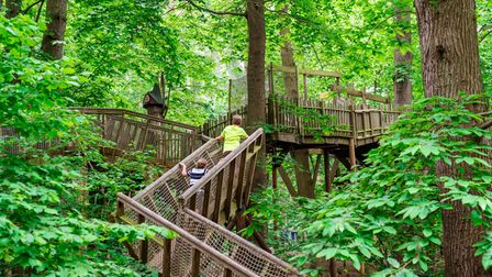 A wooden high-course in the trees
