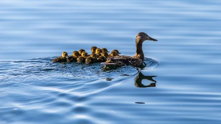 Peter Hagger took this photograph at the Paxton Pits Nature Reserve in St Neots.