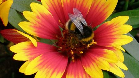 Brian Watts sent in his shot of a bee on a flower.