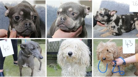 Suffolk police are asking people to get in touch if they think any of these dogs are theirs